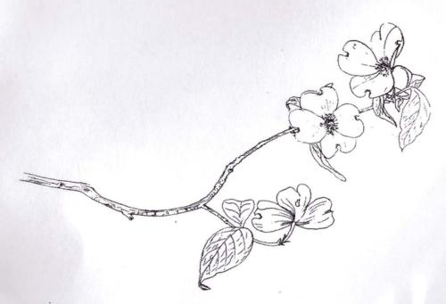 -30% Tampon Caoutchouc - FLOWERING BRANCH  BLine Designs